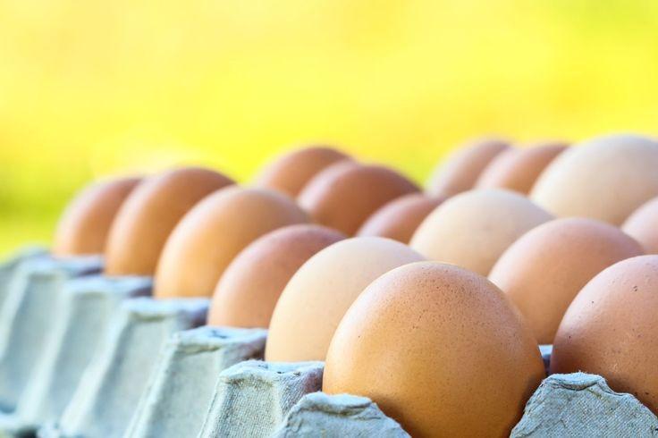 plaas eiers